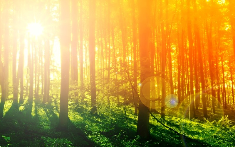 4669360-colorful-mystical-forest-with-sun-ray-at-morning_5.jpg